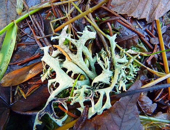 Lichen Landscapes Vegetable Nature Forest Woodland