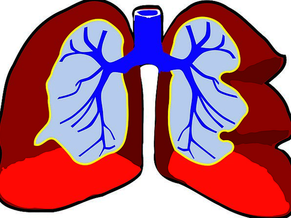 Lungs Medical Humanoid Health Anatomy Structure Hu