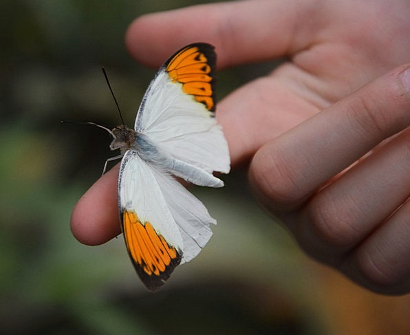 Spreading Wings Landscapes Nature Tropical House B