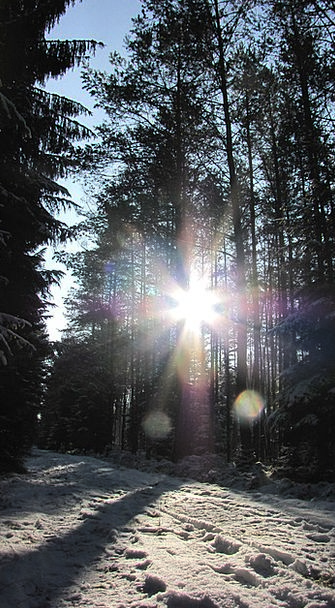 Winter Season Landscapes Nature Forest Woodland Ge