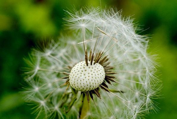 Flower Floret Landscapes Nature Wildflower Weed Da