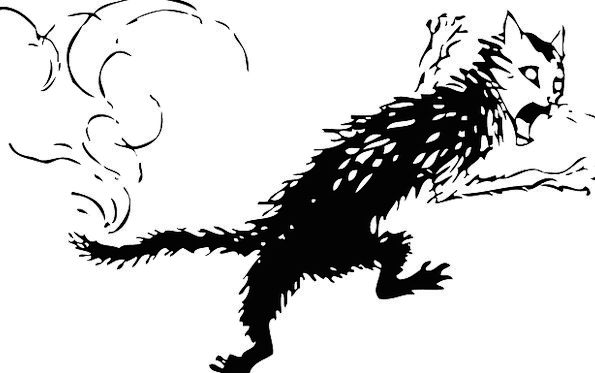 Cat Dark Mammals Creatures Black Paw Pet Domestica