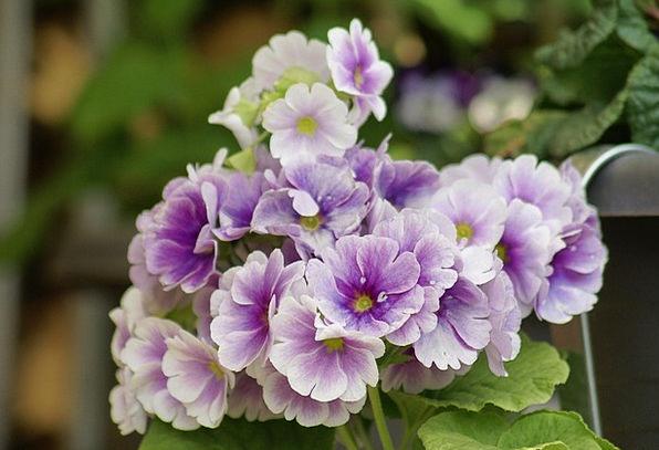 Flowers Plants Coil Purple Elaborate Spring