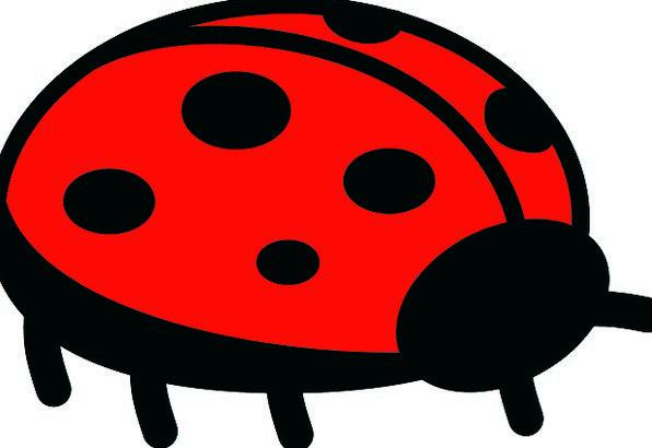 Ladybug Landscapes Germ Nature Flying Hovering Bug