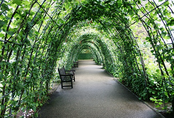 Tunnel Of Plants Green Lime Garden Tunnel Bank Set