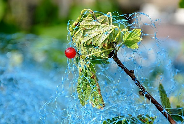 Red Currant Drink Food Bird Protection Net Currant