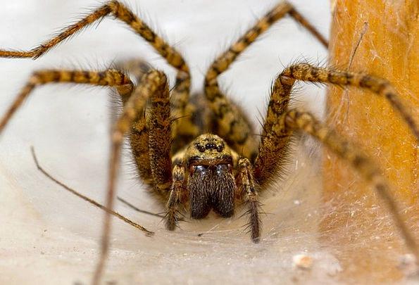 Spider Nest Shell Pokoutník Den Hole Macro Detail