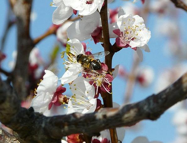 Pollination Fertilization Landscapes Nature Flower