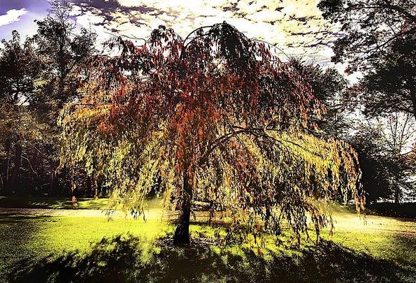 Tree Sapling Sunshine Shadows Glooms Sunlight Glow