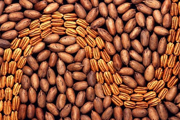 Pekanuesse Drink Mad Food Walnut Crop Nuts Shell B