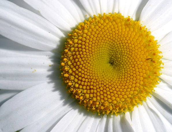 Daisy Landscapes Near Nature Macro Instruction Clo