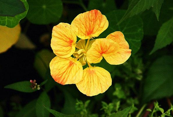 Flower Floret Creamy Spring Coil Yellow Summer Str