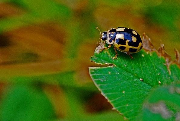 Ladybug Instruction Insect Macro Nature Countrysid