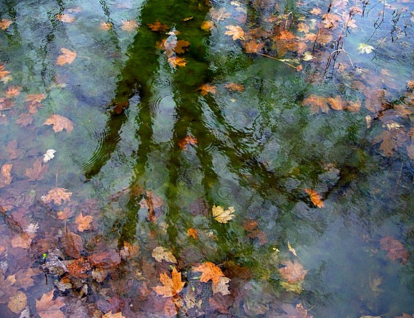 Reflections Likenesses Landscapes Sapling Nature W