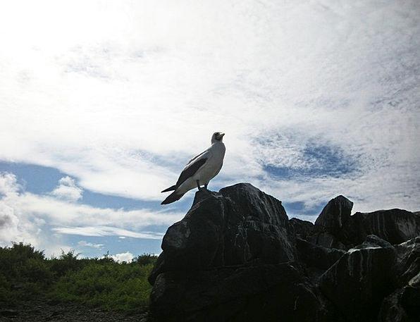 Bird Fowl Snowy Black Dark White Perched Balanced