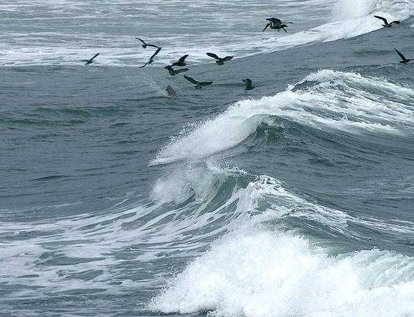 Wave Upsurge Vacation Natures Travel Flock Of Bird