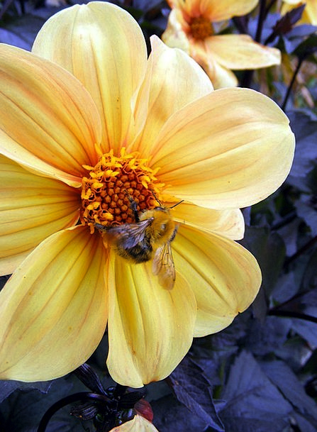 Flower Floret Creamy Bee Yellow Insects Bugs Bloss