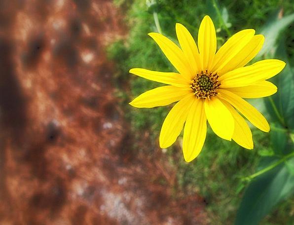 Flower Floret Landscapes Creamy Nature Garden Plot