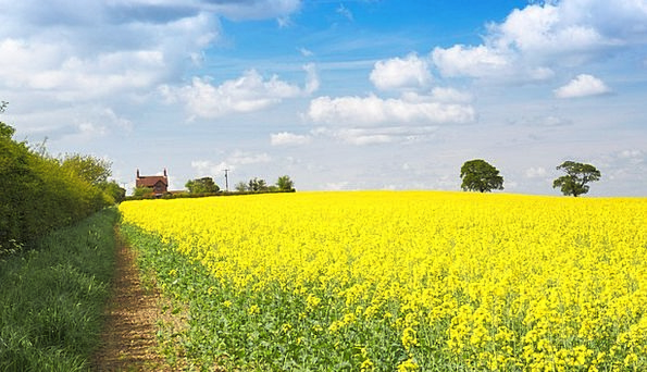 Agriculture Textures Contextual Backgrounds Bloom