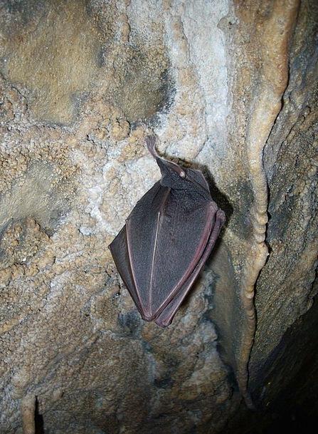 Bat Racket Cave Cavern Hibernation Cave Formations
