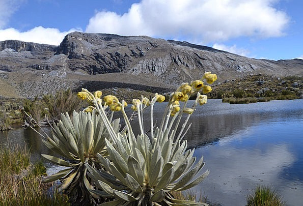 Colombia Elcocuy National Park Trekking Hiking Lag