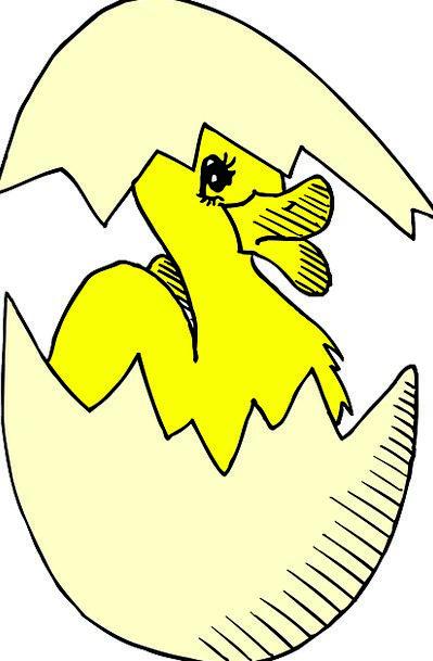 Baby Darling Fowl Duck Stoop Bird Egg Ovum Hatchin