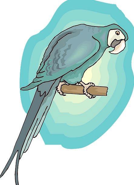 Blue Azure Fowl Background Contextual Bird Wings A