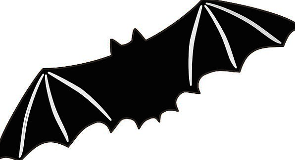 Bat Racket Hovering Wings Annexes Flying Wildlife
