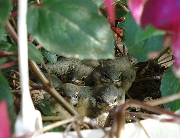 Nest Shell Spatzennest Bird'S Nest Summer Straw-ha