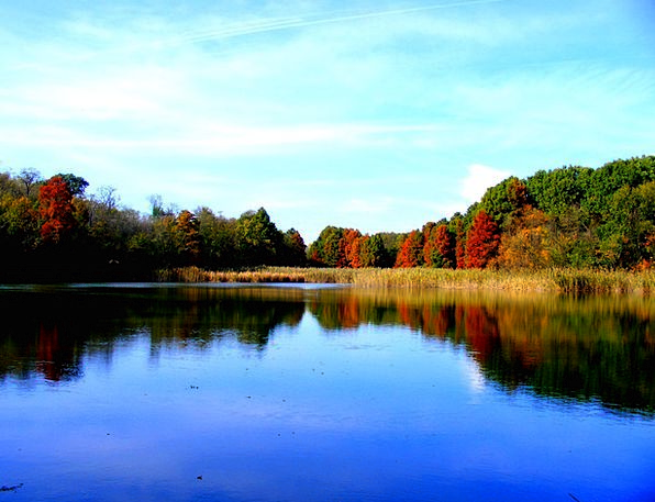 Lake Freshwater Landscapes Fall Nature Forest Wood