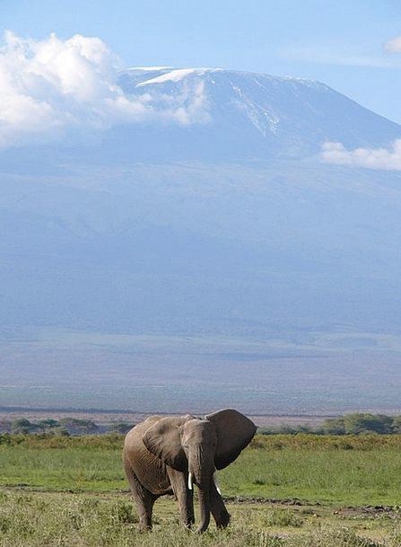 Elephant Monster Safari Trek Africa Mount Kilamanj