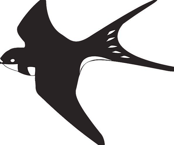 Black Dark Snowy Bird Fowl White Flying Hovering S