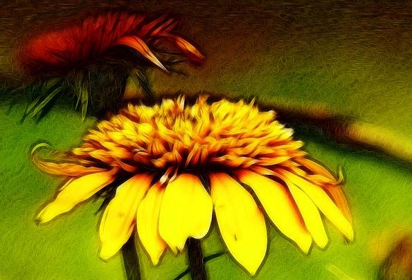 Flower Floret Abstract Nonconcrete Fractal Yellow