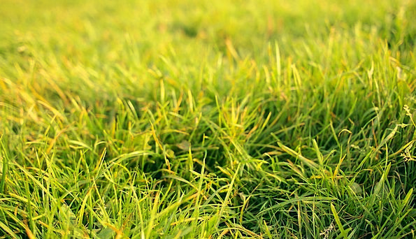 Grass Lawn Landscapes Countryside Nature Summer St