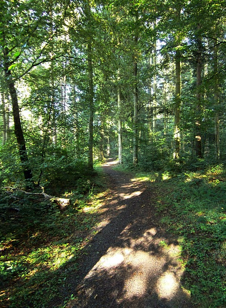 Forest Path Landscapes Woodland Nature Trees Plant