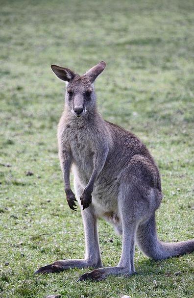 Kangaroo Jerk Landscapes Nature Nature Countryside