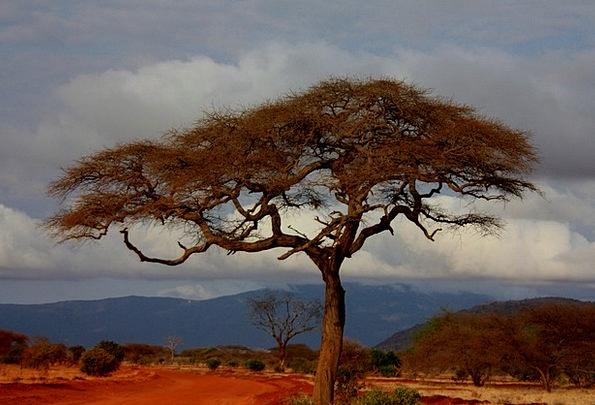 Safari Trek Landscapes Scenery Nature Holiday Brea