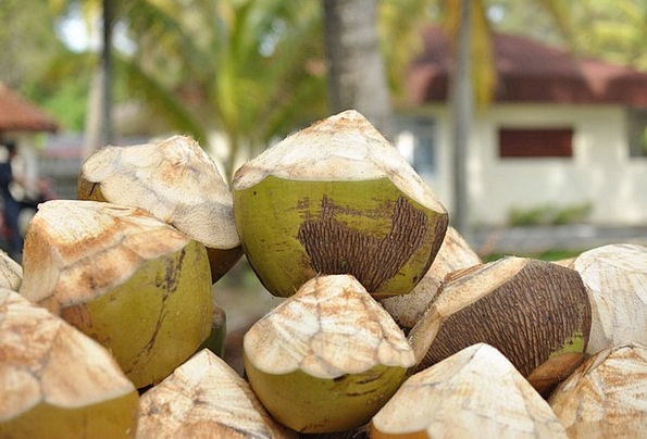 Coconuts Option Drinks Snacks Resort