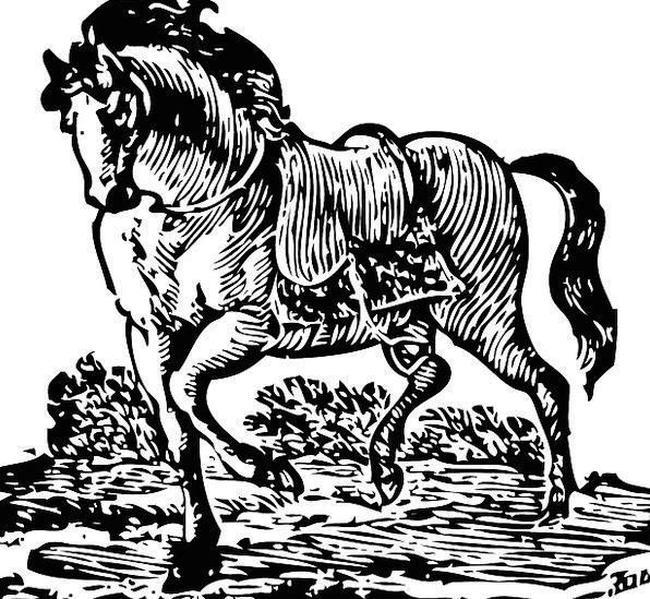 Horse Mount Elegant Walking Graceful Elegance Beau
