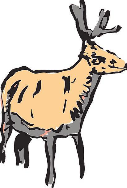 Deer Rough Animal Physical Wild Wildlife Nature Fr