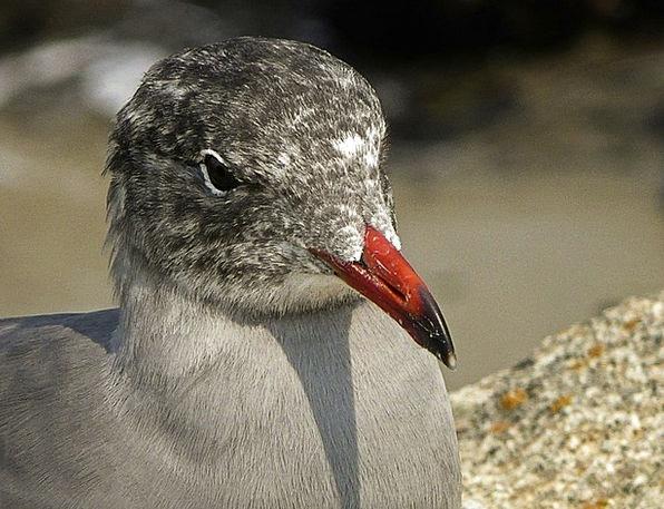 Seagull Fowl Waterbird Bird Animal Physical Nature
