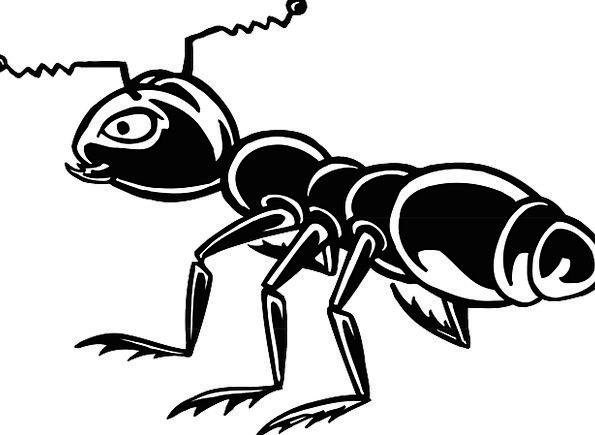 Ant Dark Insect Black Alone Bug Germ Single Macro