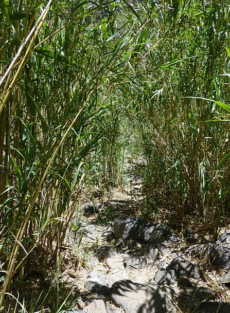 Away Absent Trail Thicket Copse Path Poaceae Scrub