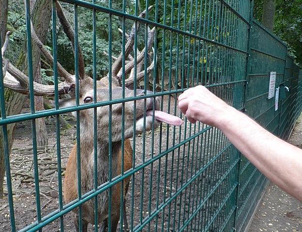 Tongue Language Landscapes Nature Animal World Hir