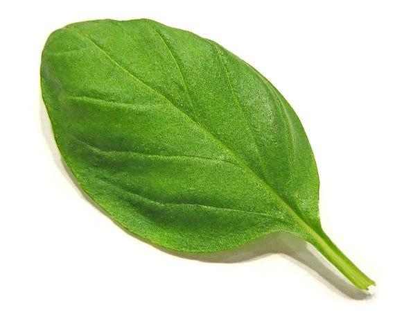 Basil Landscapes Interest Nature Herbs Basils Spic