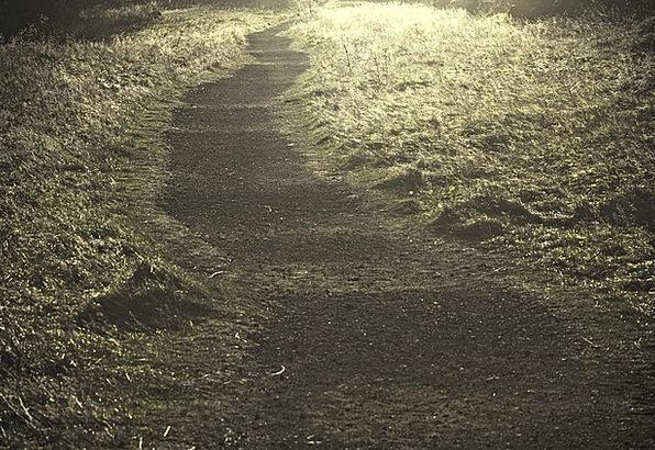Path Trail Landscapes Excellent Nature Nature Coun