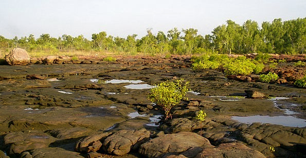 Tidal Rivulet Landscapes Nature Tropical Hot Kimbe