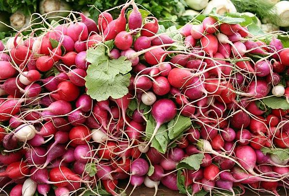 Radishes Vegetables Potatoes Radish Farmers Market