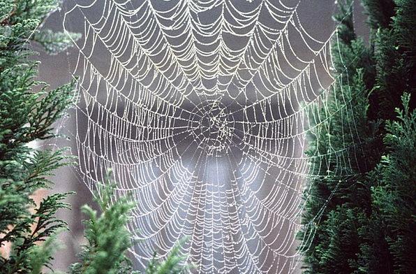 Cobweb Droplet Morgentau Dewdrop Fog Mist Network