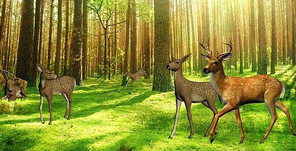 Deer Landscapes Nature Kitz Hirsch Free Forest Woo